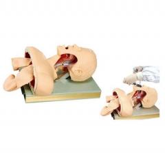 高级人体气管插管训练模型 教学演示 口腔、鼻腔气管插管道具货号100.X91