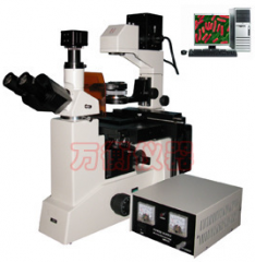 电脑型倒置生物显微镜XDS4C  XDS4D 数码 倒置生物荧光 三目倒置  货号100.L39