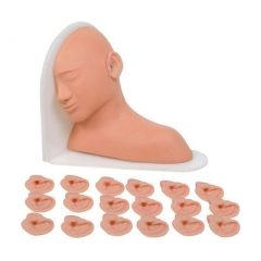 高级耳部检查模型 训练耳内检查及治疗操作 医学教具  货号100.HY112